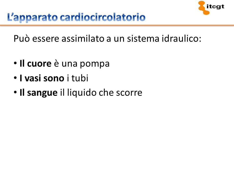 Può essere assimilato a un sistema idraulico: Il cuore è una pompa I vasi sono i tubi Il sangue il liquido che scorre