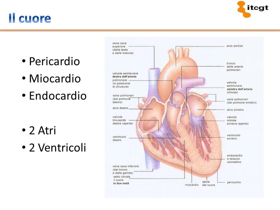 Diastole atriale Sistole atriale Diastole ventricolare Sistole ventricolare