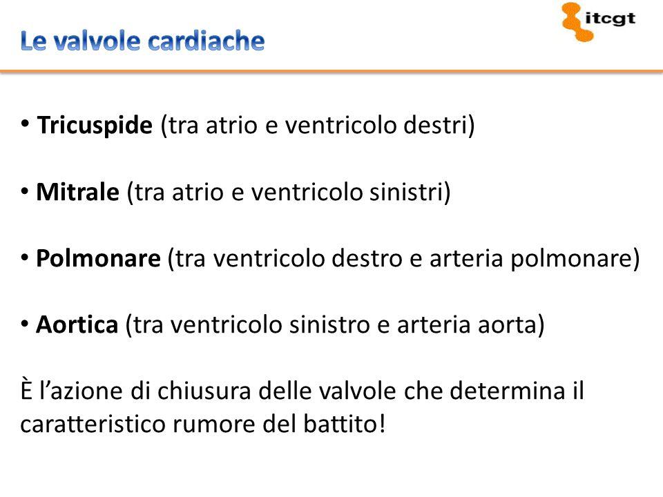 La frequenza cardiaca (numero di contrazioni del cuore al minuto) La gittata sistolica (quantità di sangue messa in circolo per contrazione) La portata cardiaca (frequenza cardiaca x gettata sistolica)