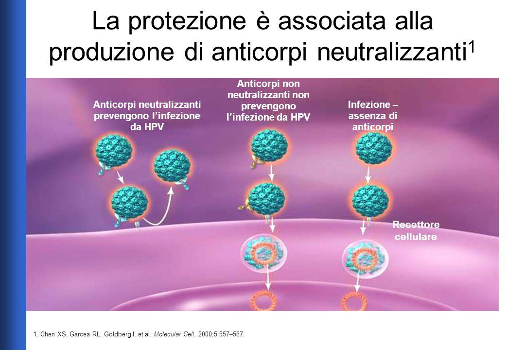 La protezione è associata alla produzione di anticorpi neutralizzanti 1 Anticorpi neutralizzanti prevengono l'infezione da HPV Anticorpi non neutraliz