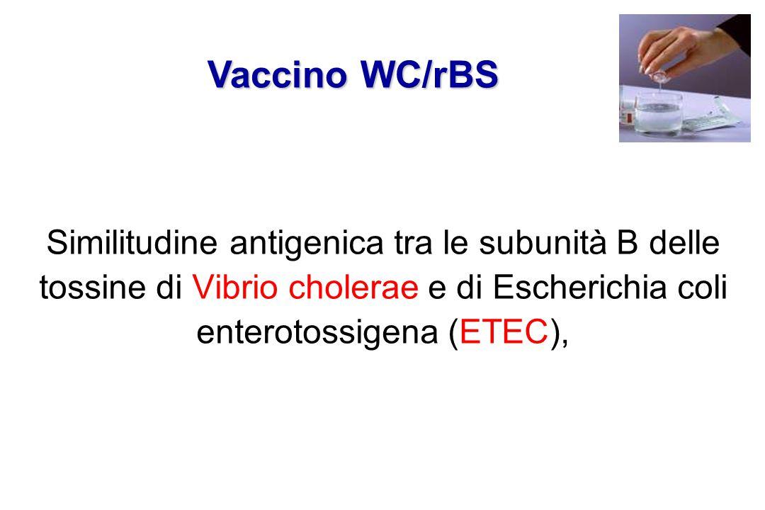 Similitudine antigenica tra le subunità B delle tossine di Vibrio cholerae e di Escherichia coli enterotossigena (ETEC), Vaccino WC/rBS