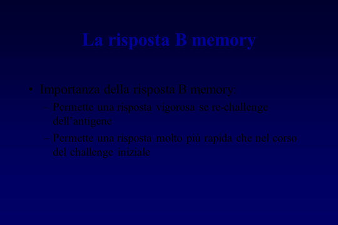 La risposta B memory Importanza della risposta B memory: –Permette una risposta vigorosa se re-challenge dell'antigene –Permette una risposta molto pi