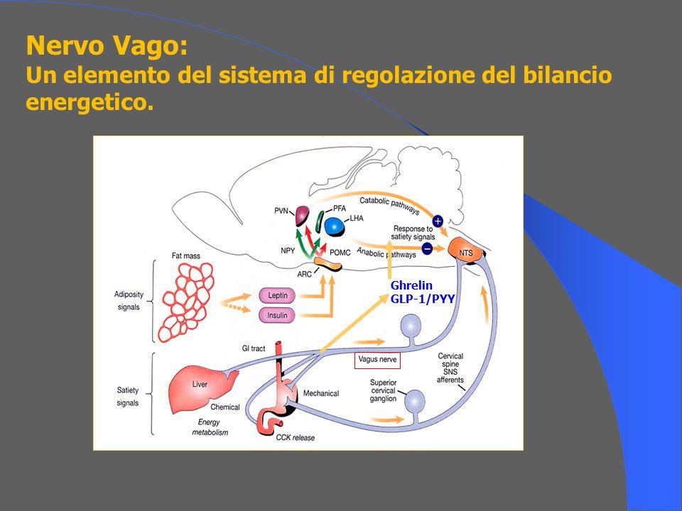 Ghrelin GLP-1/PYY Nervo Vago: Un elemento del sistema di regolazione del bilancio energetico.