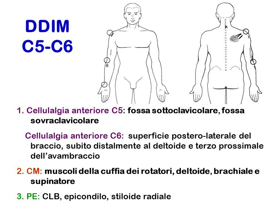 DDIM C5-C6 1. Cellulalgia anteriore C5: fossa sottoclavicolare, fossa sovraclavicolare Cellulalgia anteriore C6: superficie postero-laterale del bracc