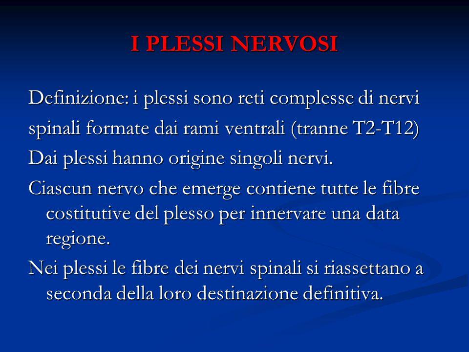 I PLESSI NERVOSI Definizione: i plessi sono reti complesse di nervi spinali formate dai rami ventrali (tranne T2-T12) Dai plessi hanno origine singoli nervi.