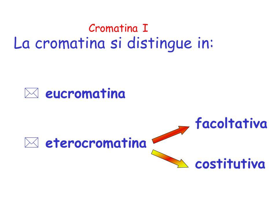 La cromatina si distingue in: * eucromatina * eterocromatina facoltativa costitutiva Cromatina I