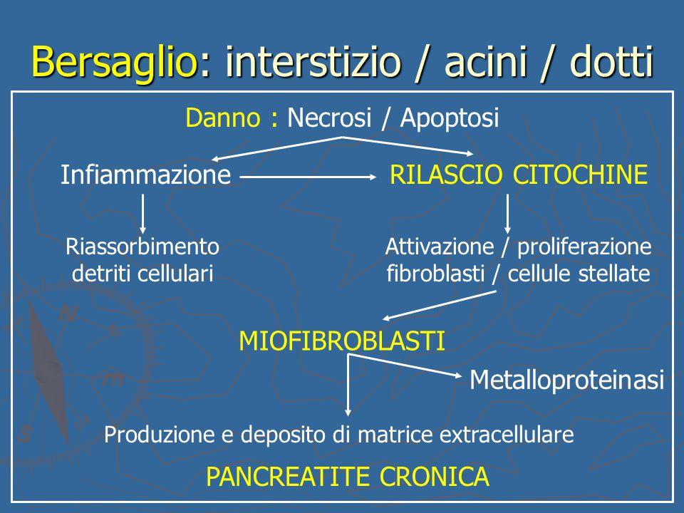 Bersaglio: interstizio / acini / dotti Danno : Necrosi / Apoptosi InfiammazioneRILASCIO CITOCHINE Riassorbimento detriti cellulari Attivazione / proli