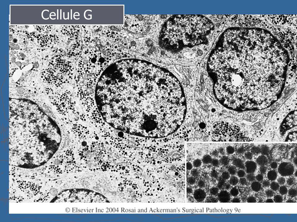 Cellule G