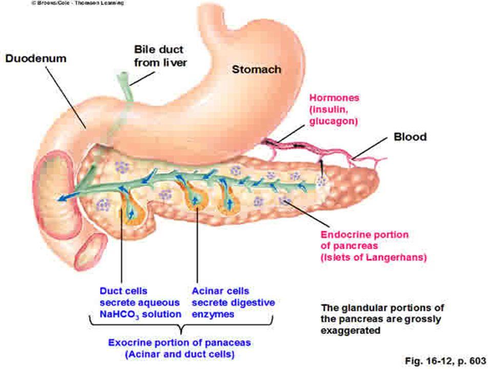 PANCREATITE DIAGNOSI MARCATORI DI INFIAMMAZIONE TNF ALFA IL6- IL8