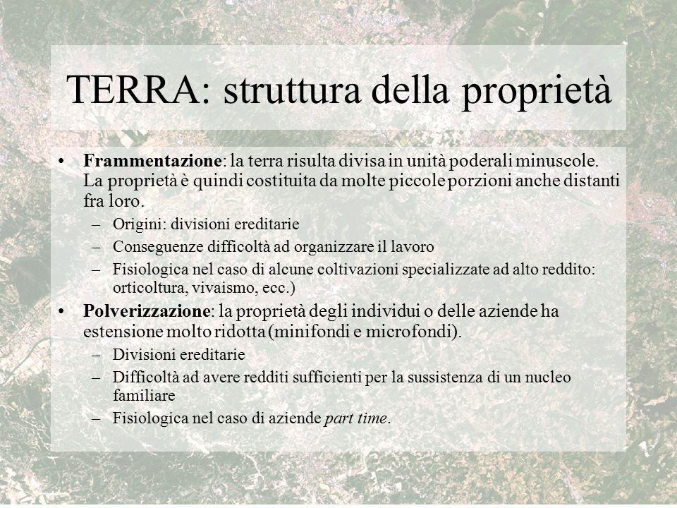 TERRA: struttura della proprietà Frammentazione: la terra risulta divisa in unità poderali minuscole. La proprietà è quindi costituita da molte piccol