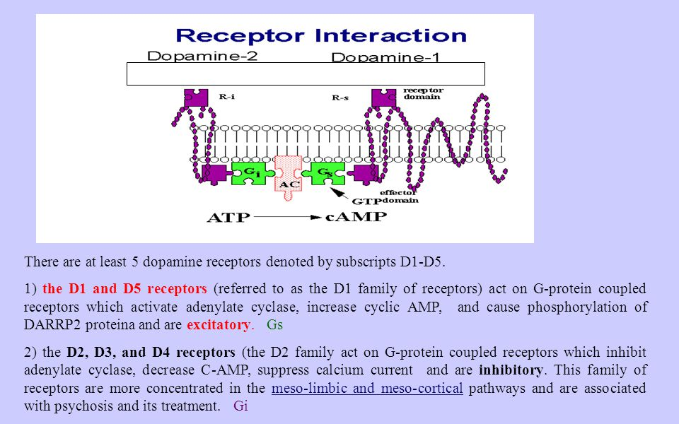 There are at least 5 dopamine receptors denoted by subscripts D1-D5. 1) the D1 and D5 receptors (referred to as the D1 family of receptors) act on G-p