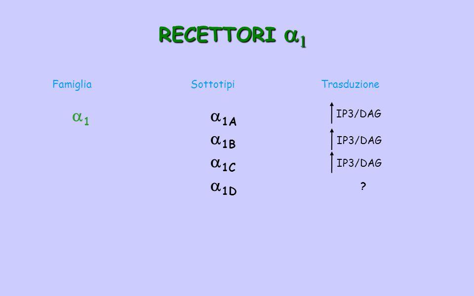 RECETTORI   FamigliaSottotipiTrasduzione 11  1A  1B  1C  1D IP3/DAG ?