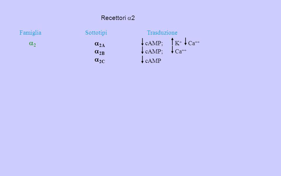 FamigliaSottotipiTrasduzione 22  2A  2B  2C cAMP;K+K+ Ca ++ cAMP;Ca ++ cAMP Recettori  2