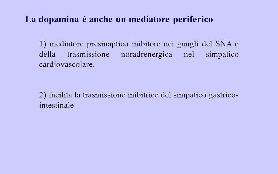 La dopamina è anche un mediatore periferico 1) mediatore presinaptico inibitore nei gangli del SNA e della trasmissione noradrenergica nel simpatico cardiovascolare.