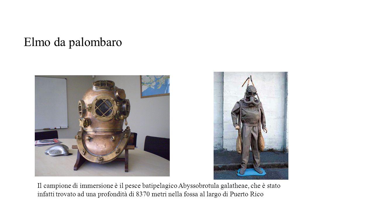 Elmo da palombaro Il campione di immersione è il pesce batipelagico Abyssobrotula galatheae, che è stato infatti trovato ad una profondità di 8370 met
