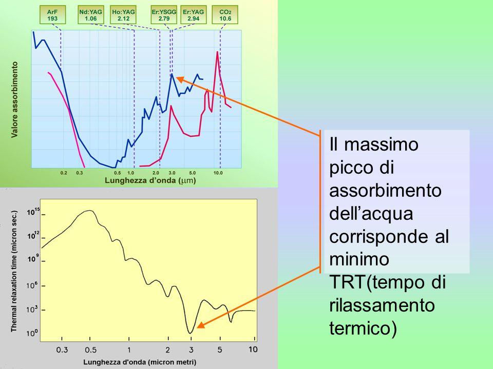Il massimo picco di assorbimento dell'acqua corrisponde al minimo TRT(tempo di rilassamento termico)