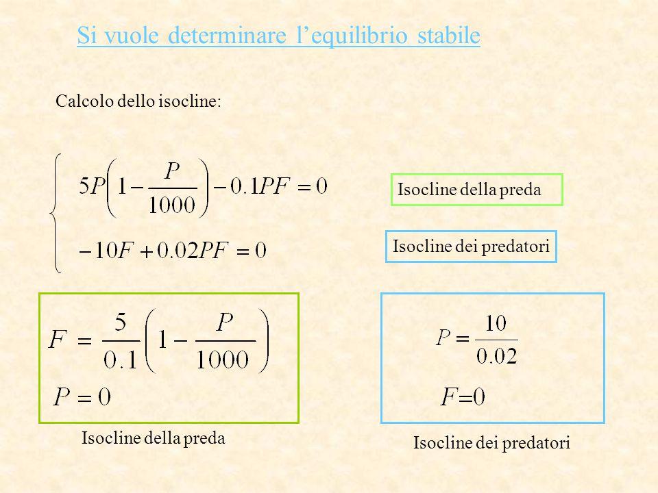 Si vuole determinare l'equilibrio stabile Calcolo dello isocline: Isocline della preda Isocline dei predatori Isocline della preda Isocline dei predat