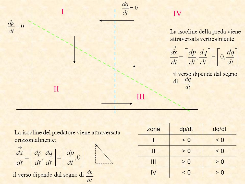 zonadp/dtdq/dt I< 0 II> 0< 0 III> 0 IV< 0> 0 I II IV III La isocline del predatore viene attraversata orizzontalmente: il verso dipende dal segno di L