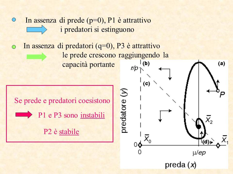 In assenza di prede (p=0), P1 è attrattivo i predatori si estinguono In assenza di predatori (q=0), P3 è attrattivo le prede crescono raggiungendo la