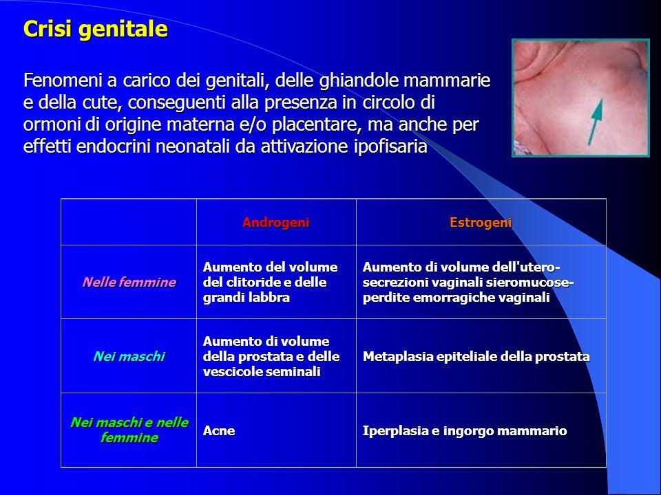 AndrogeniEstrogeni Nelle femmine Aumento del volume del clitoride e delle grandi labbra Aumento di volume dell'utero- secrezioni vaginali sieromucose-