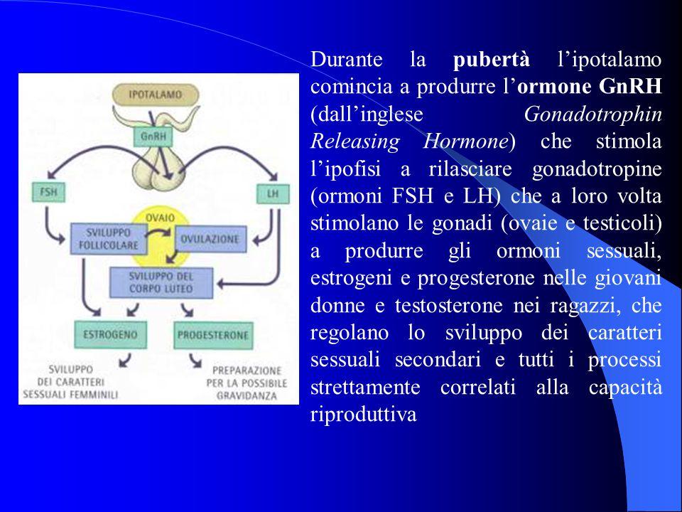 Durante la pubertà l'ipotalamo comincia a produrre l'ormone GnRH (dall'inglese Gonadotrophin Releasing Hormone) che stimola l'ipofisi a rilasciare gon