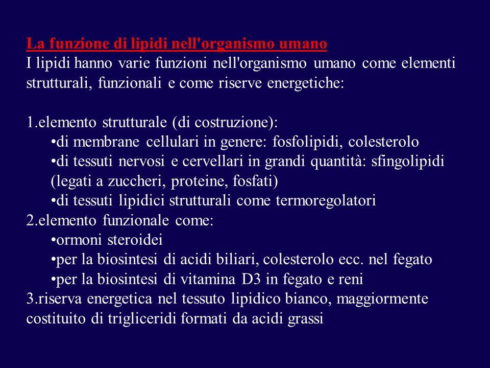 La funzione di lipidi nell organismo umano I lipidi hanno varie funzioni nell organismo umano come elementi strutturali, funzionali e come riserve energetiche: 1.elemento strutturale (di costruzione): di membrane cellulari in genere: fosfolipidi, colesterolo di tessuti nervosi e cervellari in grandi quantità: sfingolipidi (legati a zuccheri, proteine, fosfati) di tessuti lipidici strutturali come termoregolatori 2.elemento funzionale come: ormoni steroidei per la biosintesi di acidi biliari, colesterolo ecc.