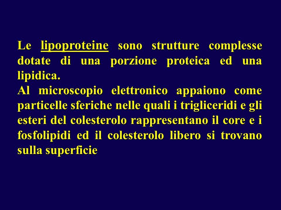 Le lipoproteine sono strutture complesse dotate di una porzione proteica ed una lipidica.