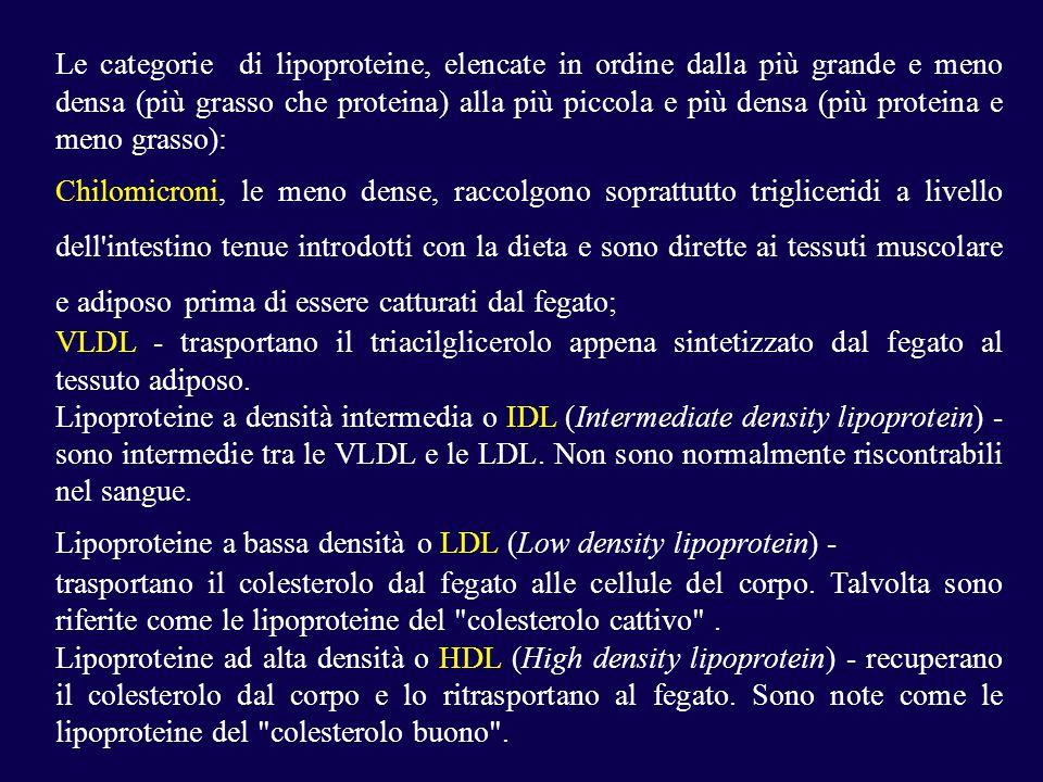 Le categorie di lipoproteine, elencate in ordine dalla più grande e meno densa (più grasso che proteina) alla più piccola e più densa (più proteina e meno grasso): Chilomicroni, le meno dense, raccolgono soprattutto trigliceridi a livello dell intestino tenue introdotti con la dieta e sono dirette ai tessuti muscolare e adiposo prima di essere catturati dal fegato; VLDL - trasportano il triacilglicerolo appena sintetizzato dal fegato al tessuto adiposo.