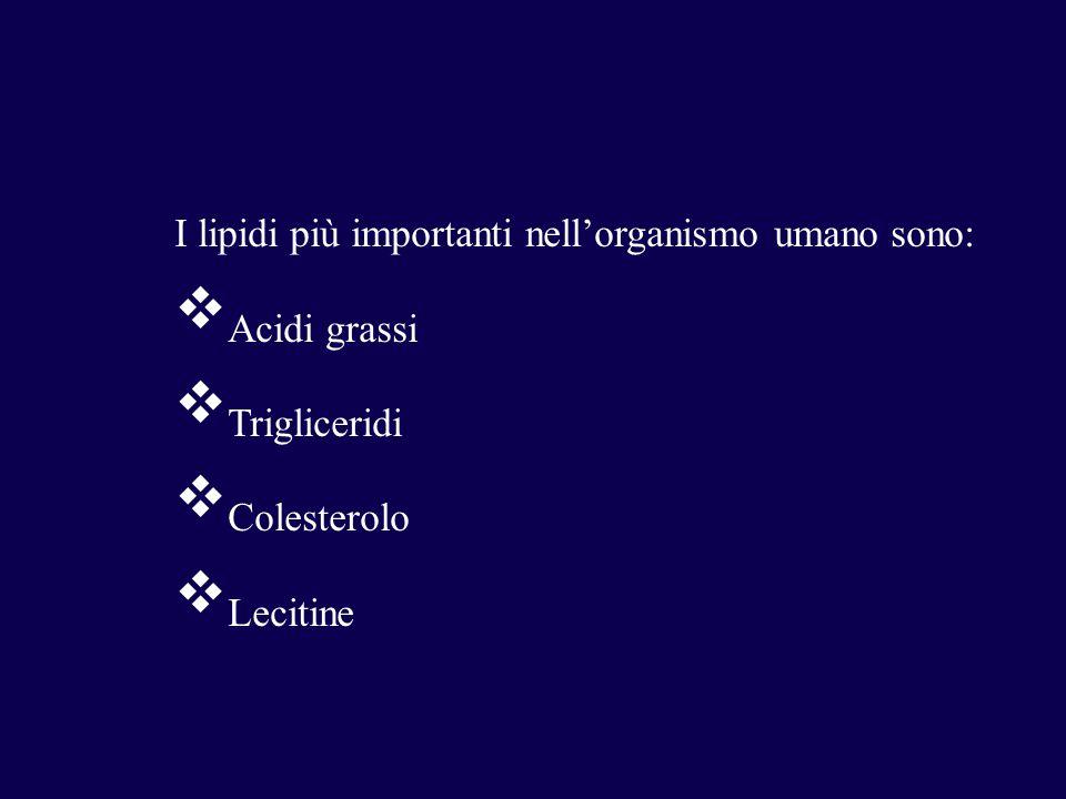 I lipidi più importanti nell'organismo umano sono:  Acidi grassi  Trigliceridi  Colesterolo  Lecitine