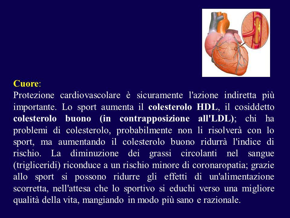 Cuore: Protezione cardiovascolare è sicuramente l azione indiretta più importante.