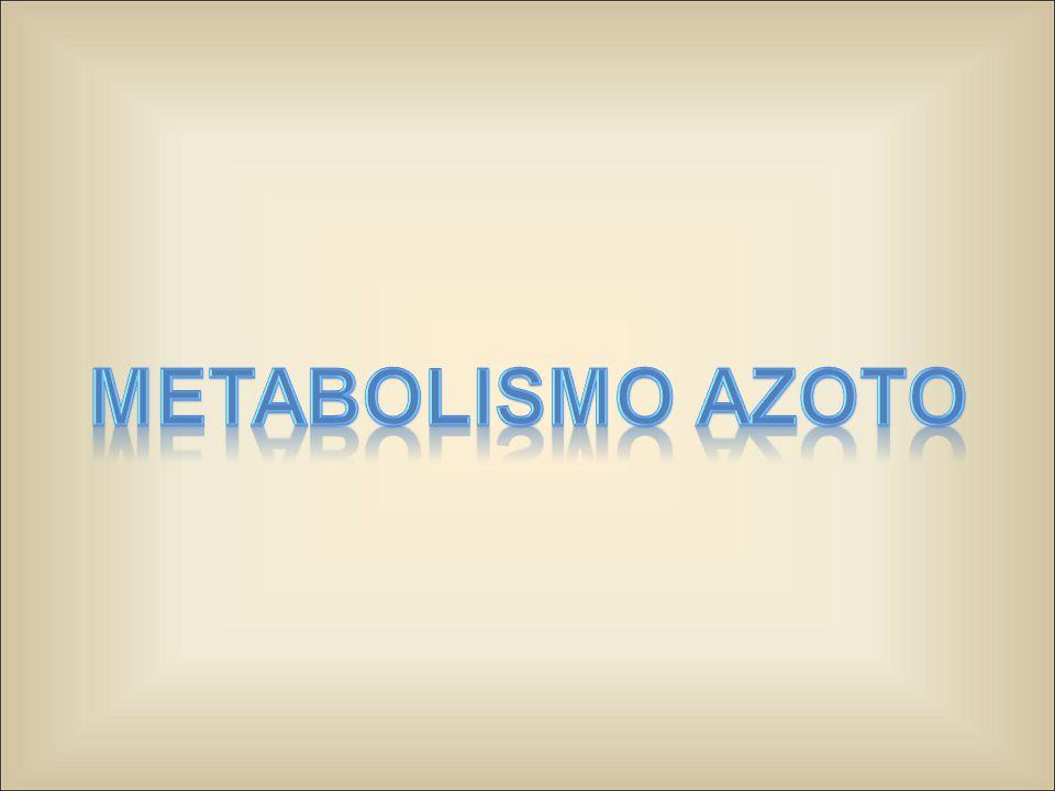 Deaminazione Il definitivo distacco del gruppo aminico degli amino acidi avviene nel processo di deaminazione, che può essere:  Ossidativo  Non ossidativo