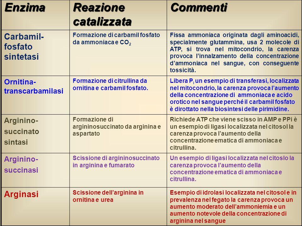 Enzima Reazione catalizzata Commenti Carbamil- fosfato sintetasi Formazione di carbamil fosfato da ammoniaca e CO 2 Fissa ammoniaca originata dagli am