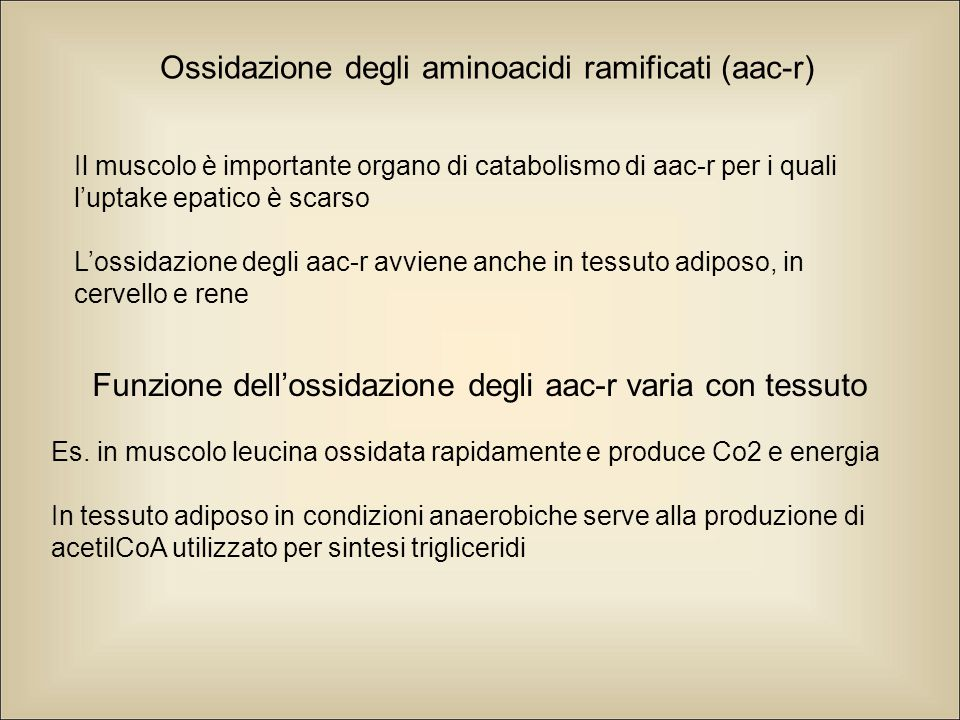 Ossidazione degli aminoacidi ramificati (aac-r) Il muscolo è importante organo di catabolismo di aac-r per i quali l'uptake epatico è scarso L'ossidazione degli aac-r avviene anche in tessuto adiposo, in cervello e rene Funzione dell'ossidazione degli aac-r varia con tessuto Es.