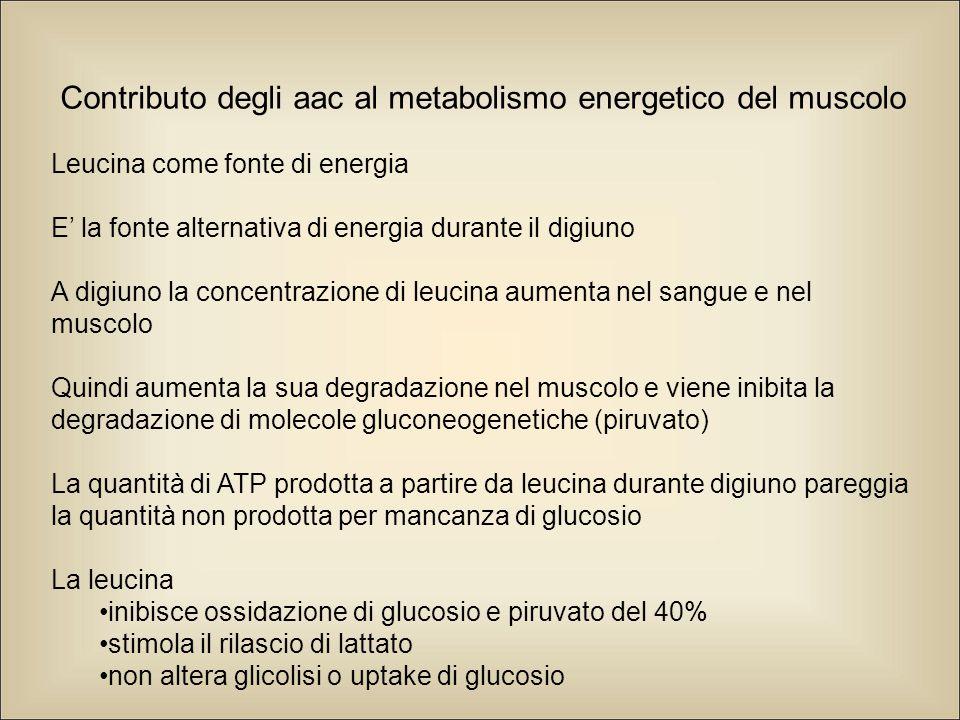 Contributo degli aac al metabolismo energetico del muscolo Leucina come fonte di energia E' la fonte alternativa di energia durante il digiuno A digiuno la concentrazione di leucina aumenta nel sangue e nel muscolo Quindi aumenta la sua degradazione nel muscolo e viene inibita la degradazione di molecole gluconeogenetiche (piruvato) La quantità di ATP prodotta a partire da leucina durante digiuno pareggia la quantità non prodotta per mancanza di glucosio La leucina inibisce ossidazione di glucosio e piruvato del 40% stimola il rilascio di lattato non altera glicolisi o uptake di glucosio Altri aac sono poco efficienti produttori di energia