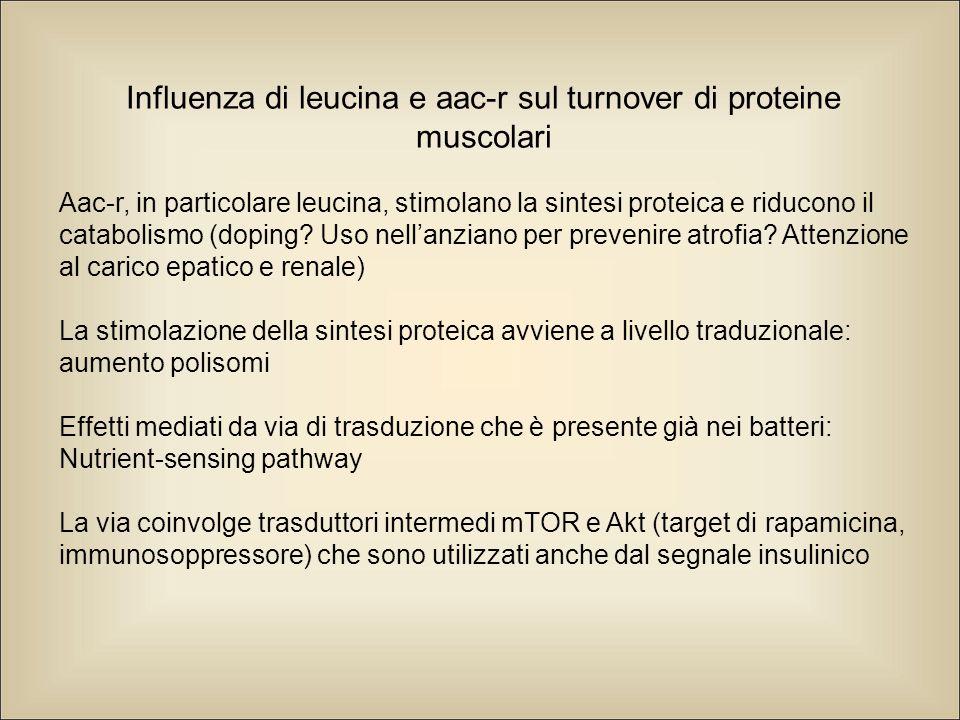 Influenza di leucina e aac-r sul turnover di proteine muscolari Aac-r, in particolare leucina, stimolano la sintesi proteica e riducono il catabolismo