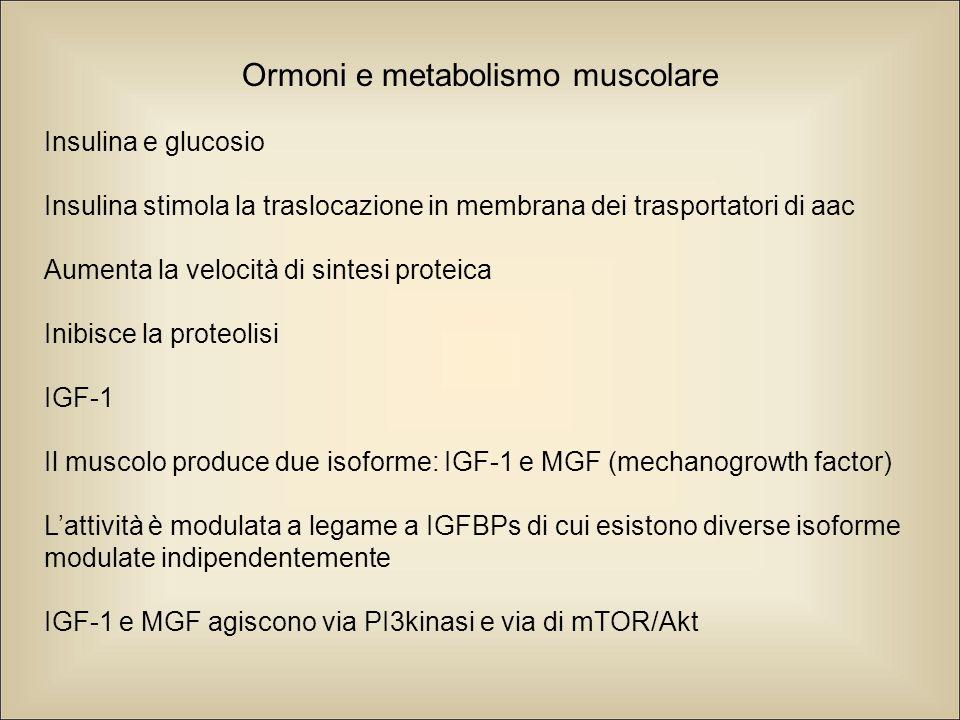Insulina e glucosio Insulina stimola la traslocazione in membrana dei trasportatori di aac Aumenta la velocità di sintesi proteica Inibisce la proteolisi IGF-1 Il muscolo produce due isoforme: IGF-1 e MGF (mechanogrowth factor) L'attività è modulata a legame a IGFBPs di cui esistono diverse isoforme modulate indipendentemente IGF-1 e MGF agiscono via PI3kinasi e via di mTOR/Akt