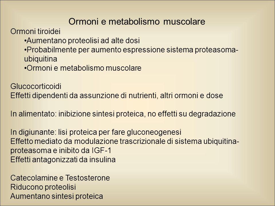Ormoni e metabolismo muscolare Ormoni tiroidei Aumentano proteolisi ad alte dosi Probabilmente per aumento espressione sistema proteasoma- ubiquitina Ormoni e metabolismo muscolare Glucocorticoidi Effetti dipendenti da assunzione di nutrienti, altri ormoni e dose In alimentato: inibizione sintesi proteica, no effetti su degradazione In digiunante: lisi proteica per fare gluconeogenesi Effetto mediato da modulazione trascrizionale di sistema ubiquitina- proteasoma e inibito da IGF-1 Effetti antagonizzati da insulina Catecolamine e Testosterone Riducono proteolisi Aumentano sintesi proteica