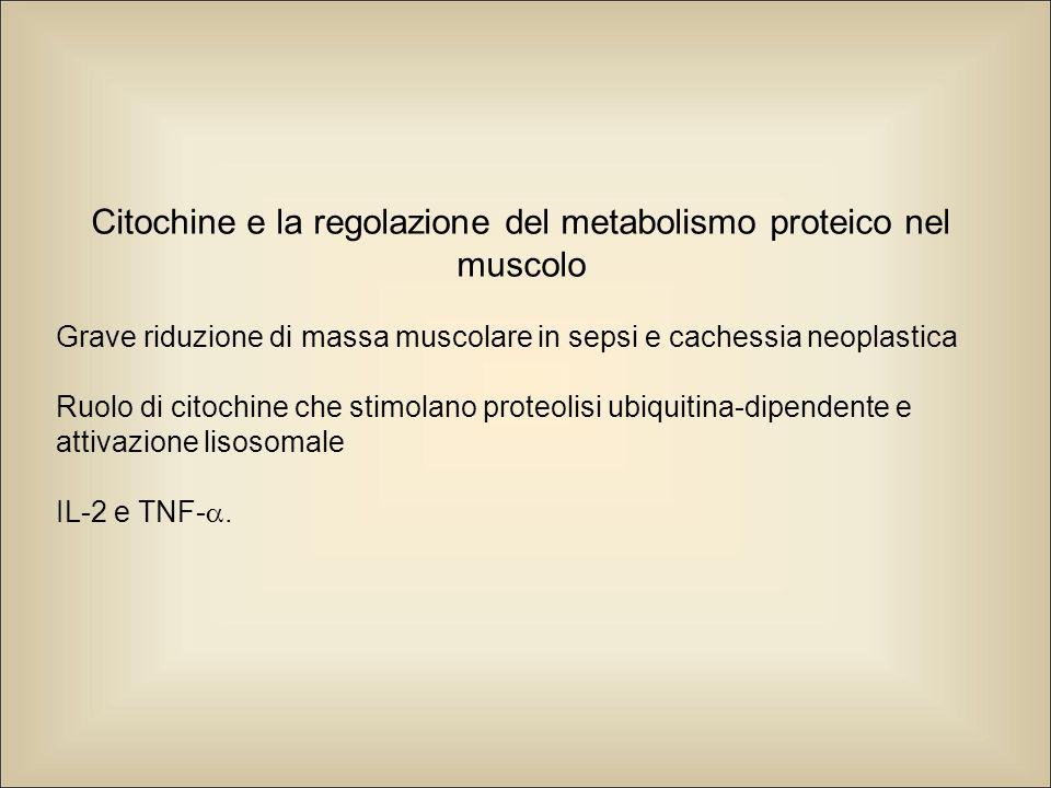 Citochine e la regolazione del metabolismo proteico nel muscolo Grave riduzione di massa muscolare in sepsi e cachessia neoplastica Ruolo di citochine che stimolano proteolisi ubiquitina-dipendente e attivazione lisosomale IL-2 e TNF- .