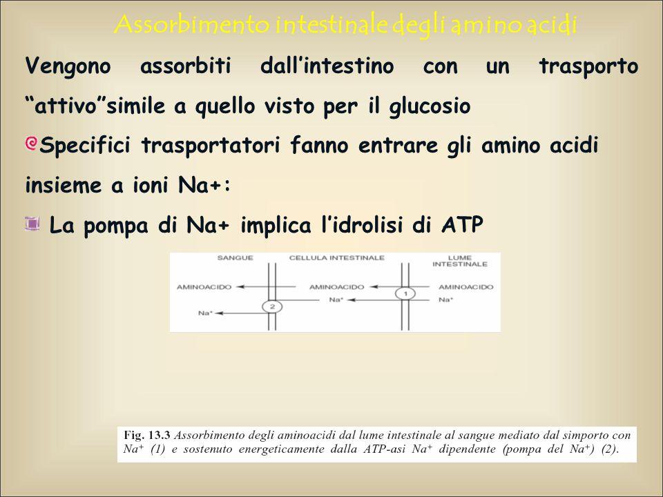 """Assorbimento intestinale degli amino acidi Vengono assorbiti dall'intestino con un trasporto """"attivo""""simile a quello visto per il glucosio Specifici t"""