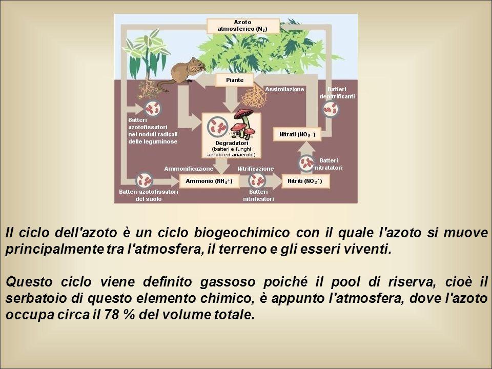 Il ciclo dell'azoto è un ciclo biogeochimico con il quale l'azoto si muove principalmente tra l'atmosfera, il terreno e gli esseri viventi. Questo cic