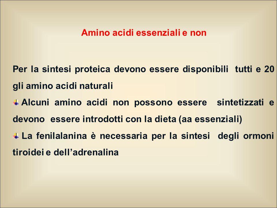 Amino acidi essenziali e non Per la sintesi proteica devono essere disponibili tutti e 20 gli amino acidi naturali Alcuni amino acidi non possono esse