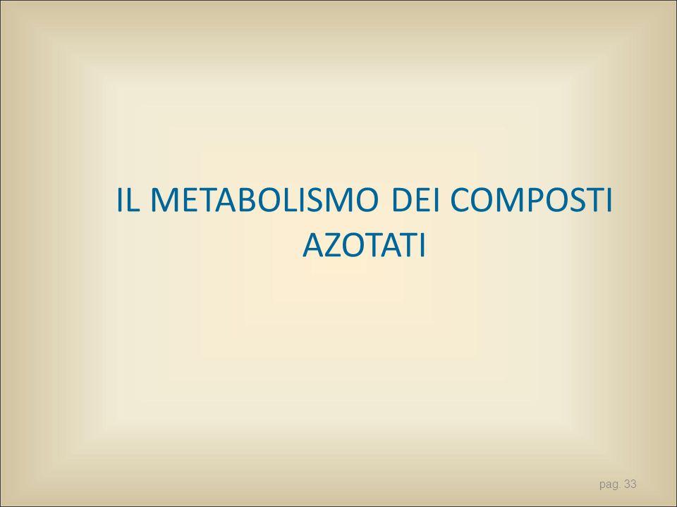 pag. 33 IL METABOLISMO DEI COMPOSTI AZOTATI