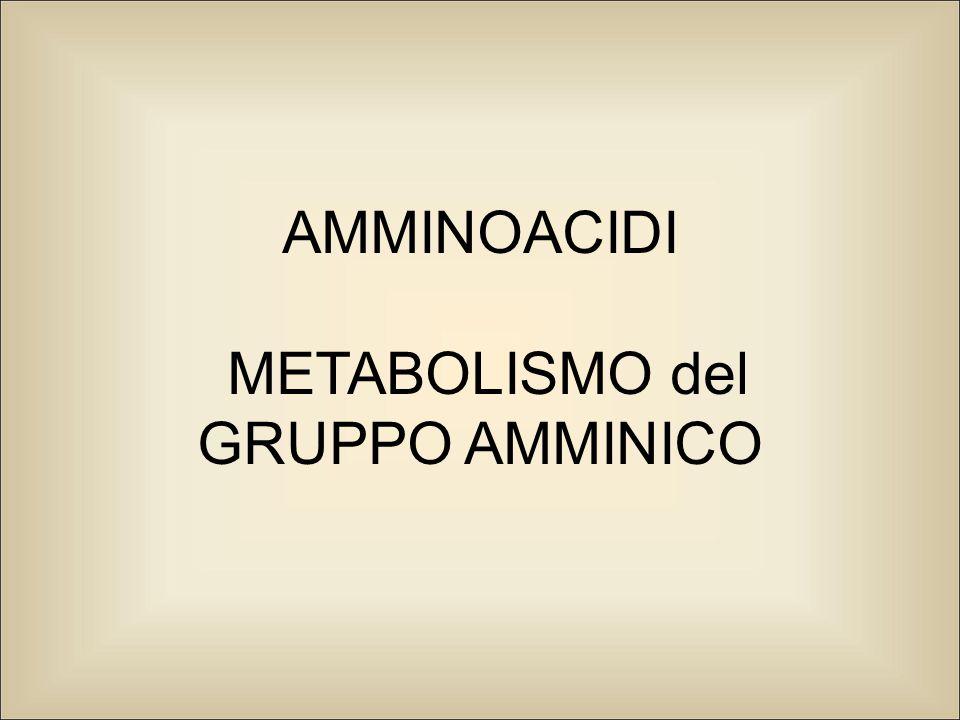 AMMINOACIDI METABOLISMO del GRUPPO AMMINICO