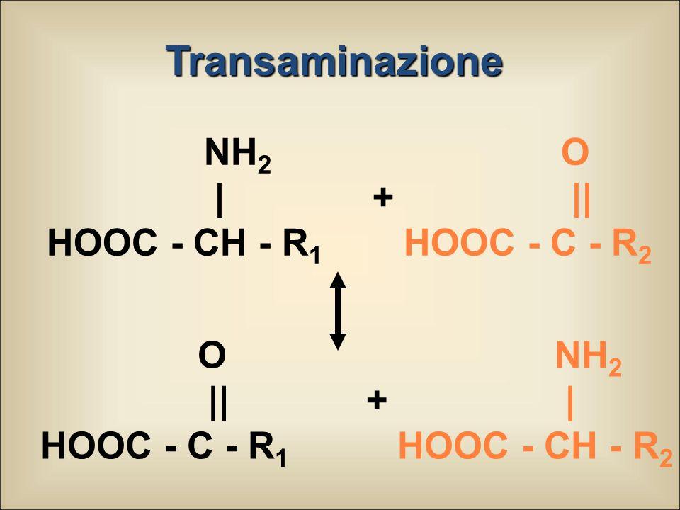 Transaminazione NH 2   + HOOC - CH - R 1 O    HOOC - C - R 2 O    + HOOC - C - R 1 NH 2   HOOC - CH - R 2