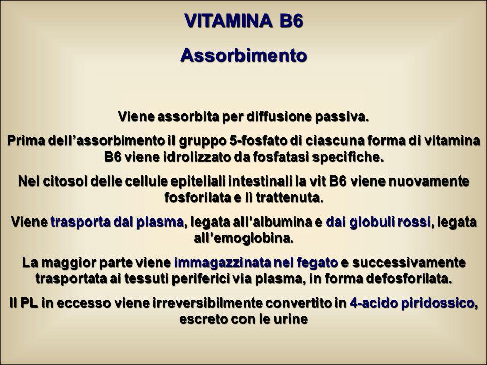 VITAMINA B6 Assorbimento Viene assorbita per diffusione passiva. Prima dell'assorbimento il gruppo 5-fosfato di ciascuna forma di vitamina B6 viene id