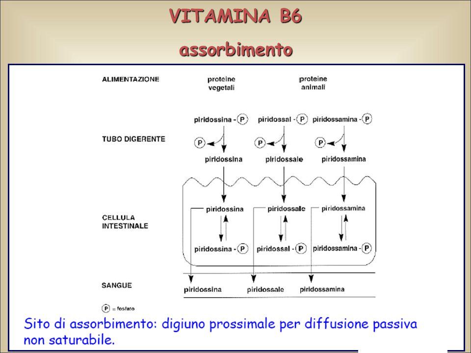 VITAMINA B6 assorbimento