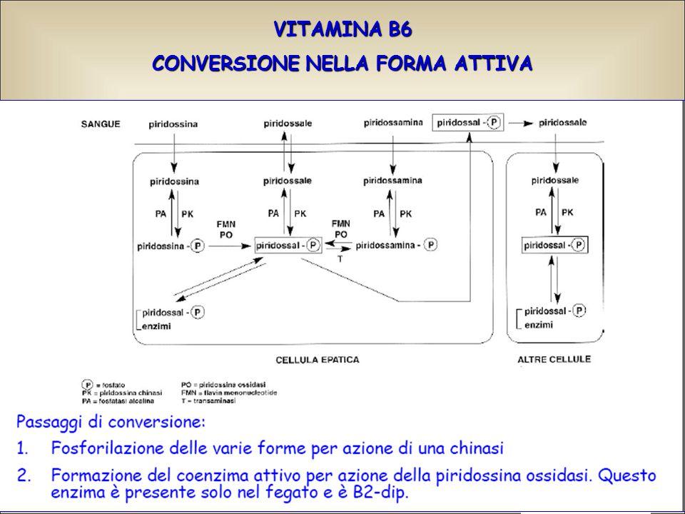 VITAMINA B6 CONVERSIONE NELLA FORMA ATTIVA