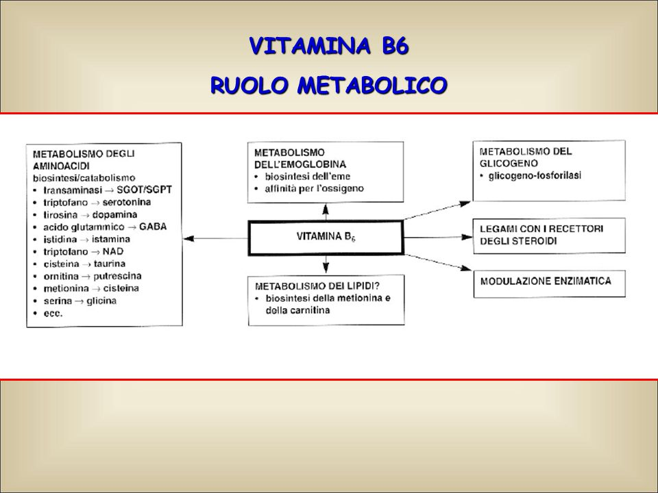 VITAMINA B6 RUOLO METABOLICO