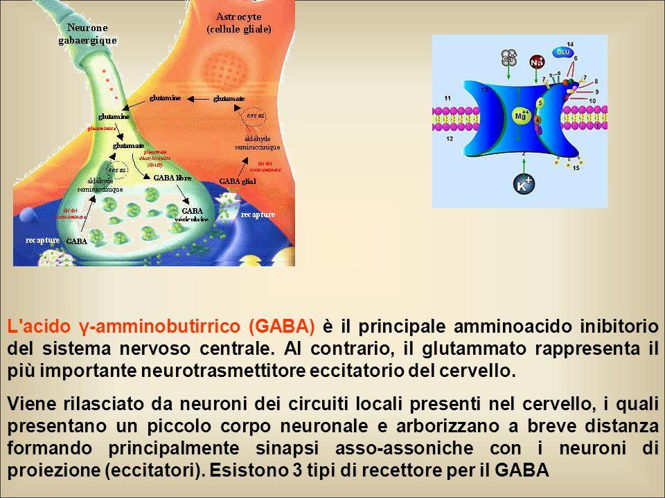 L'acido γ-amminobutirrico (GABA) è il principale amminoacido inibitorio del sistema nervoso centrale. Al contrario, il glutammato rappresenta il più i