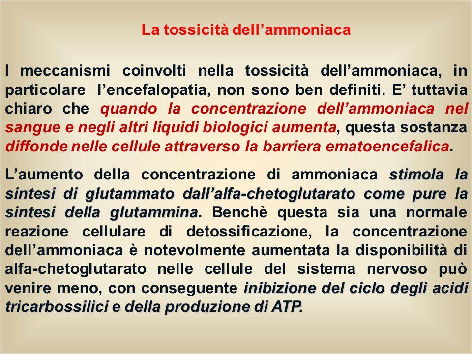La tossicità dell'ammoniaca I meccanismi coinvolti nella tossicità dell'ammoniaca, in particolare l'encefalopatia, non sono ben definiti. E' tuttavia